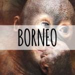 Family Holiday Destinations Borneo