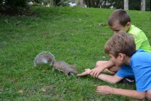 Feeding squirrels in the park