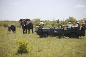safari Ngala