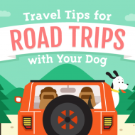 Road trips with your dog